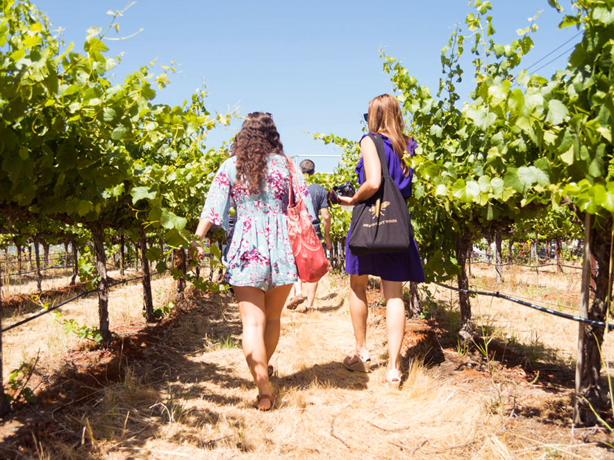A group of people walks through a row of grapevines at Meadowcoft Wines