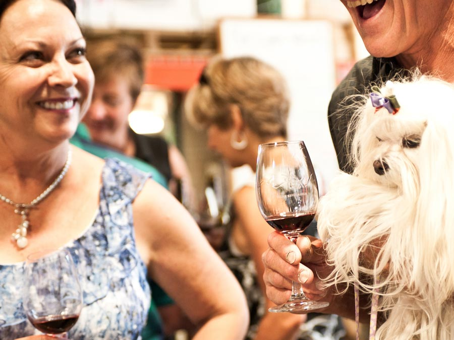 Guests enjoy wine alongside their dog at Mutt Lynch Winery, Windsor