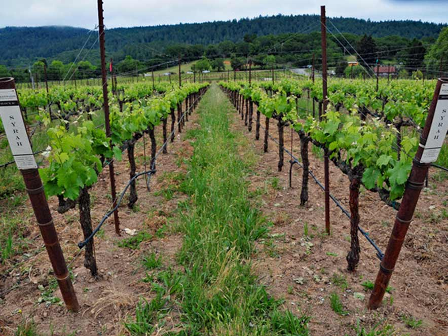 The Annadel Gap Vineyard of Westwood Estate Wines in Spring, Sonoma County