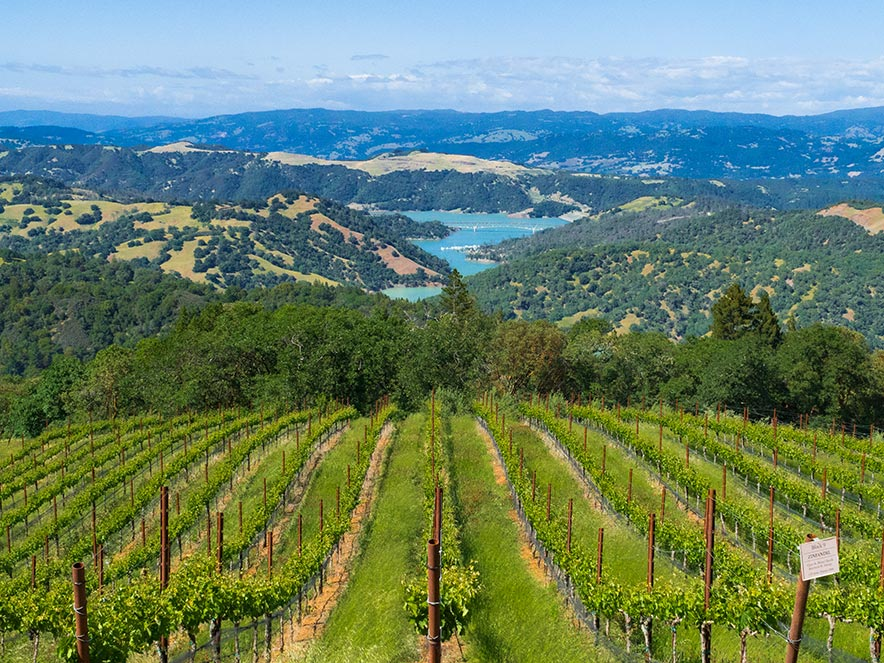A vista of vineyards leading down a mountain to a lake view in Sonoma County