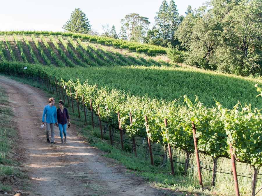 A couple walks down a path next to a vineyard in Dry Creek Valley AVA, Sonoma County