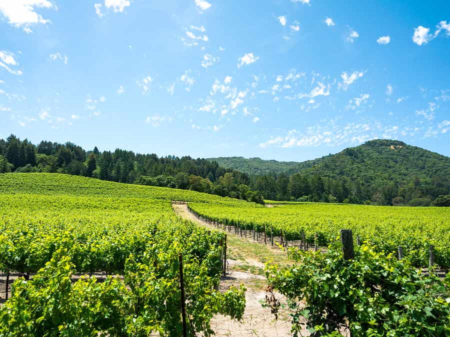 Lush, green vineyards and a bright blue sky can be found in Sonoma County