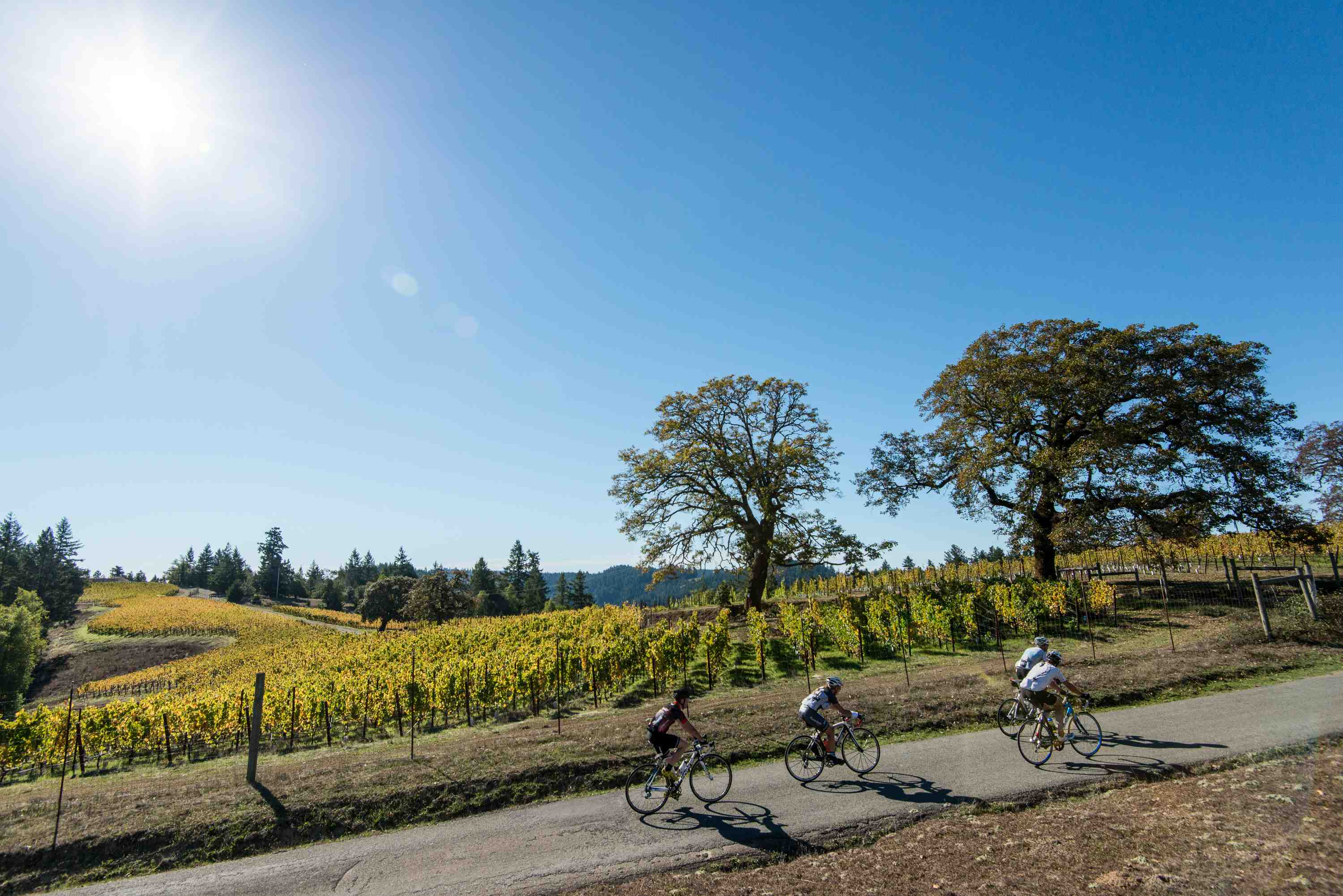 Go on a Wine Country bicycle tour with Getaway Adventures in Sonoma County, California
