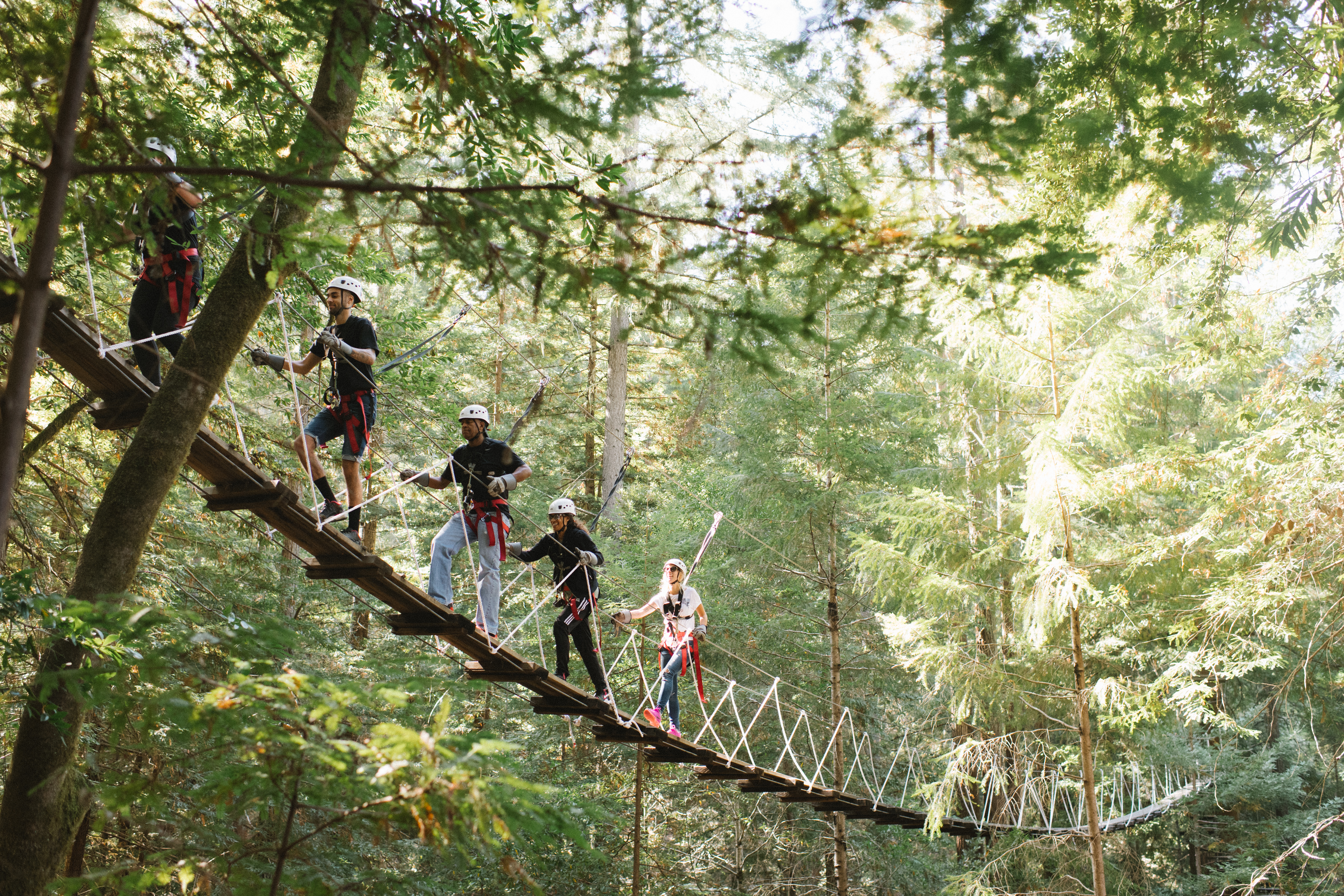 Go ziplining in the Sonoma County redwoods with Sonoma Canopy Tours near Armstrong Redwoods, Guerneville, Sonoma County, California