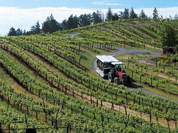 benziger winery wine tasting tour sonoma county wine tasting tips