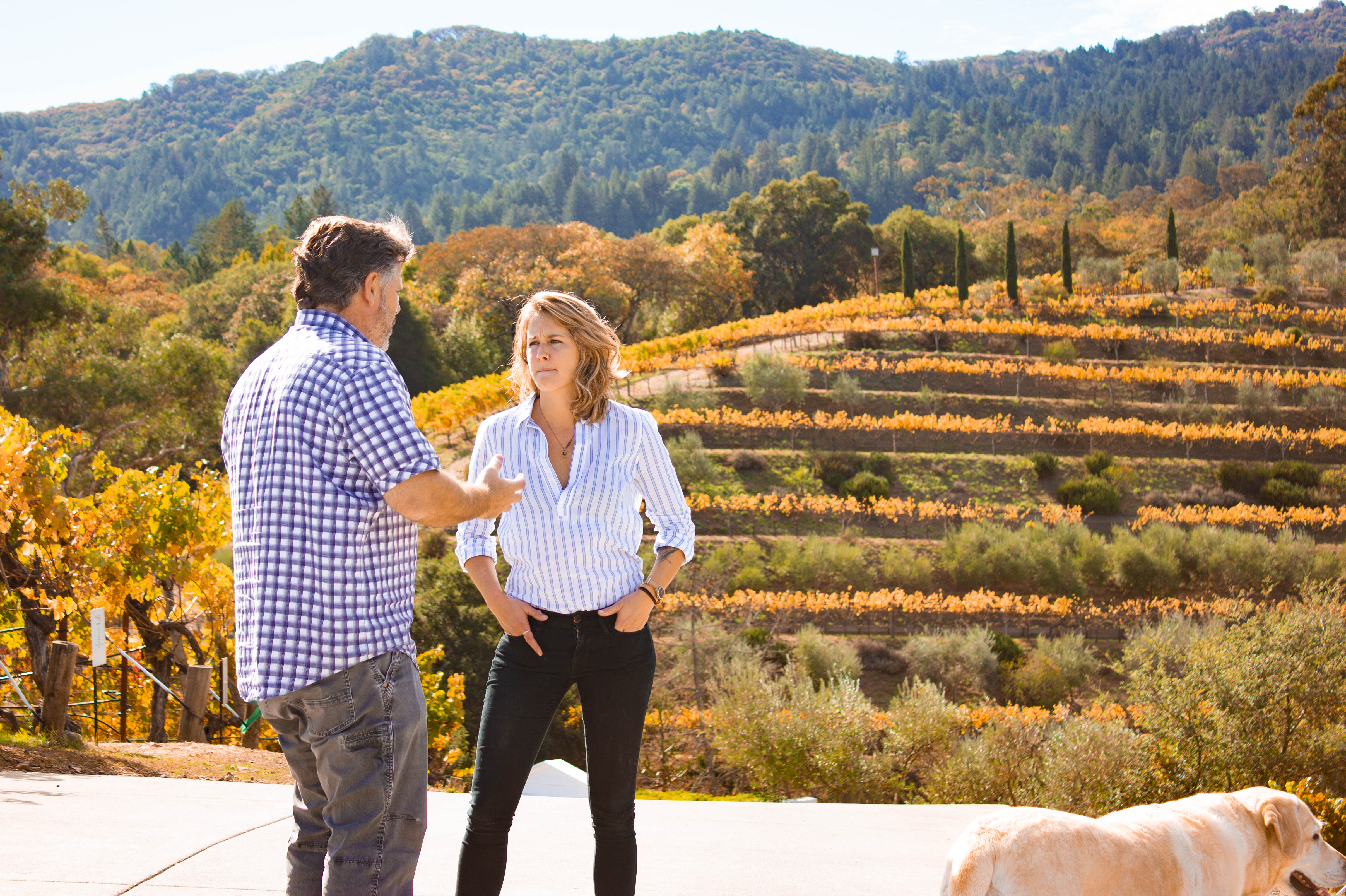 Take a tram tour at Benziger Family Winery and you might meet owner Chris Benziger, Sonoma County, California
