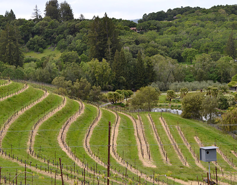 Benziger Family Winery in Sonoma County, California