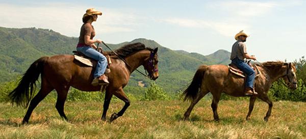 Chanselor Ranch, Bodega Bay, California