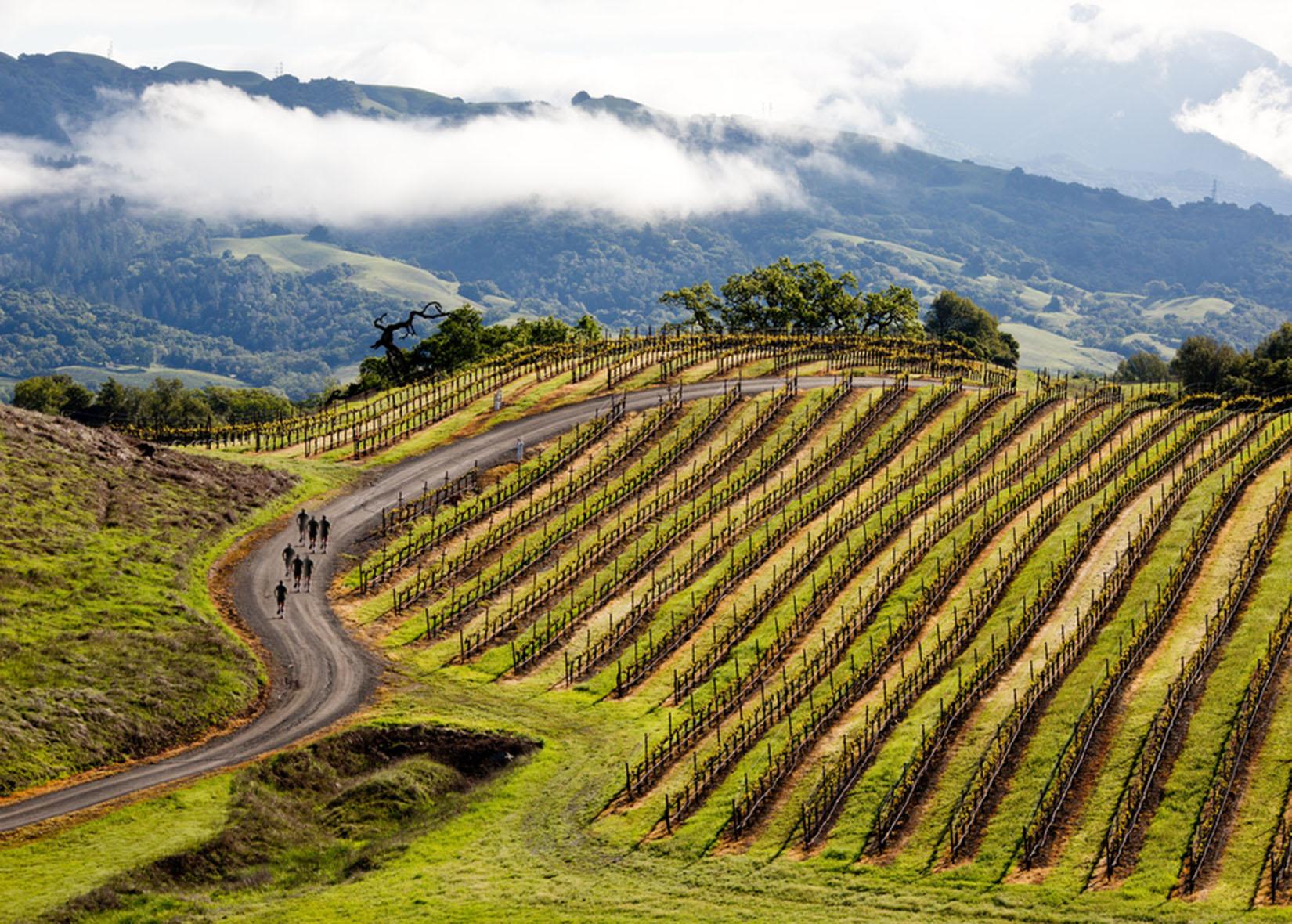 Jordan Winery, Sonoma County, California