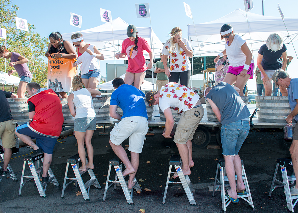 Enter the International Grape Stomp Competition at the Sonoma County Harvest Fair, Sonoma County, California