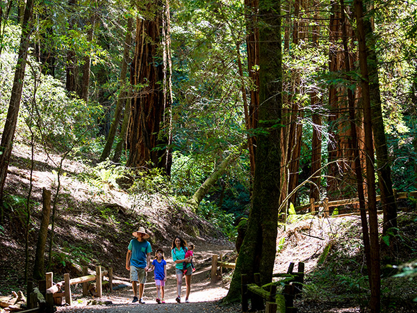 armstrong redwoods state preserve sonoma county guerneville