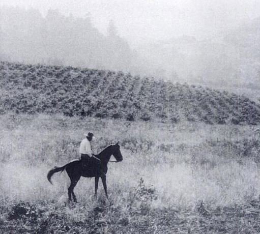 Jack London rides in front of his vineyards at Beauty Ranch in Sonoma County, California