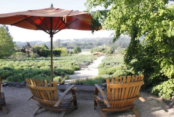 matanzas creek winery sonoma county