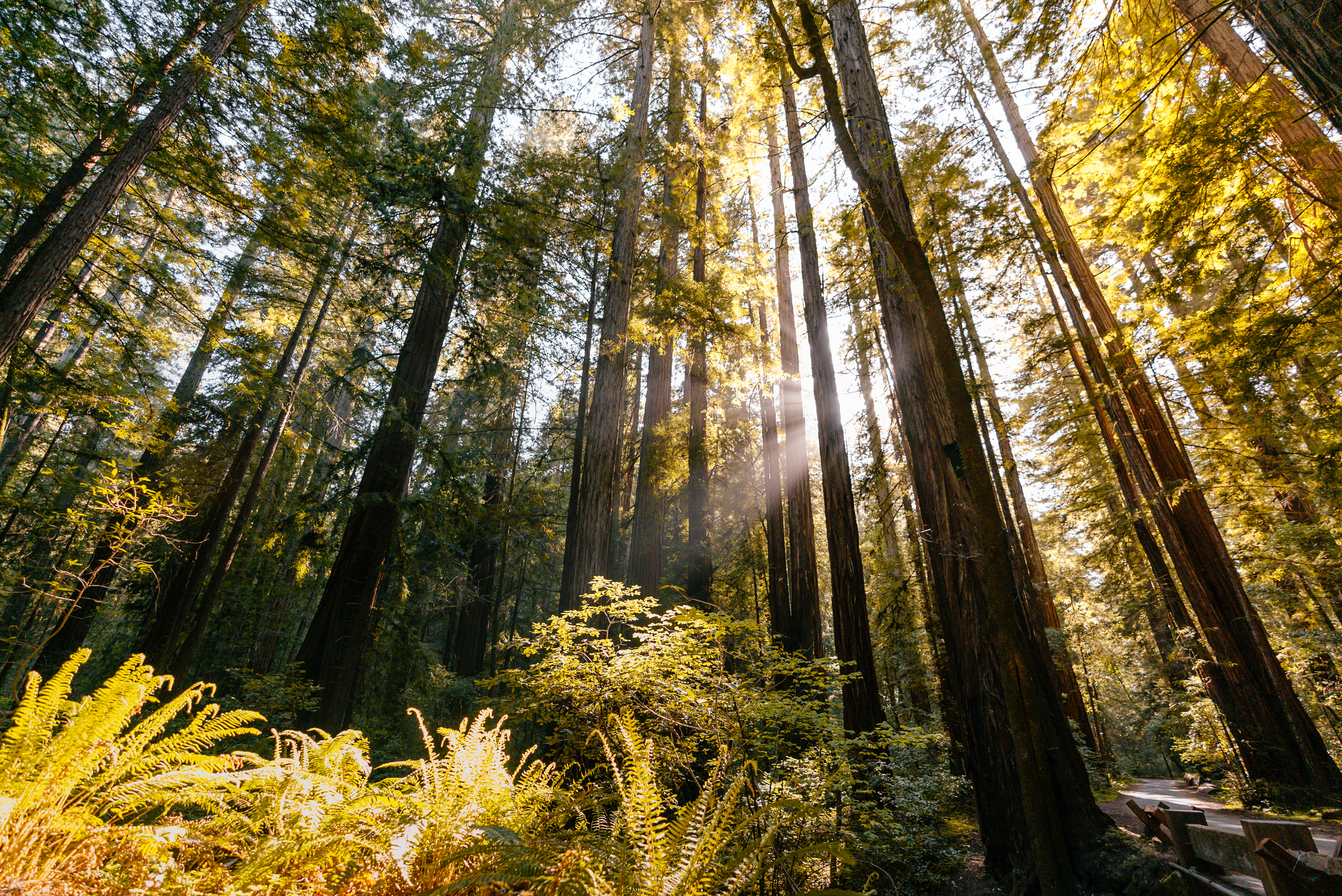 Go hiking in Armstrong Redwoods State Natural Reserve in Guerneville, Sonoma County, California