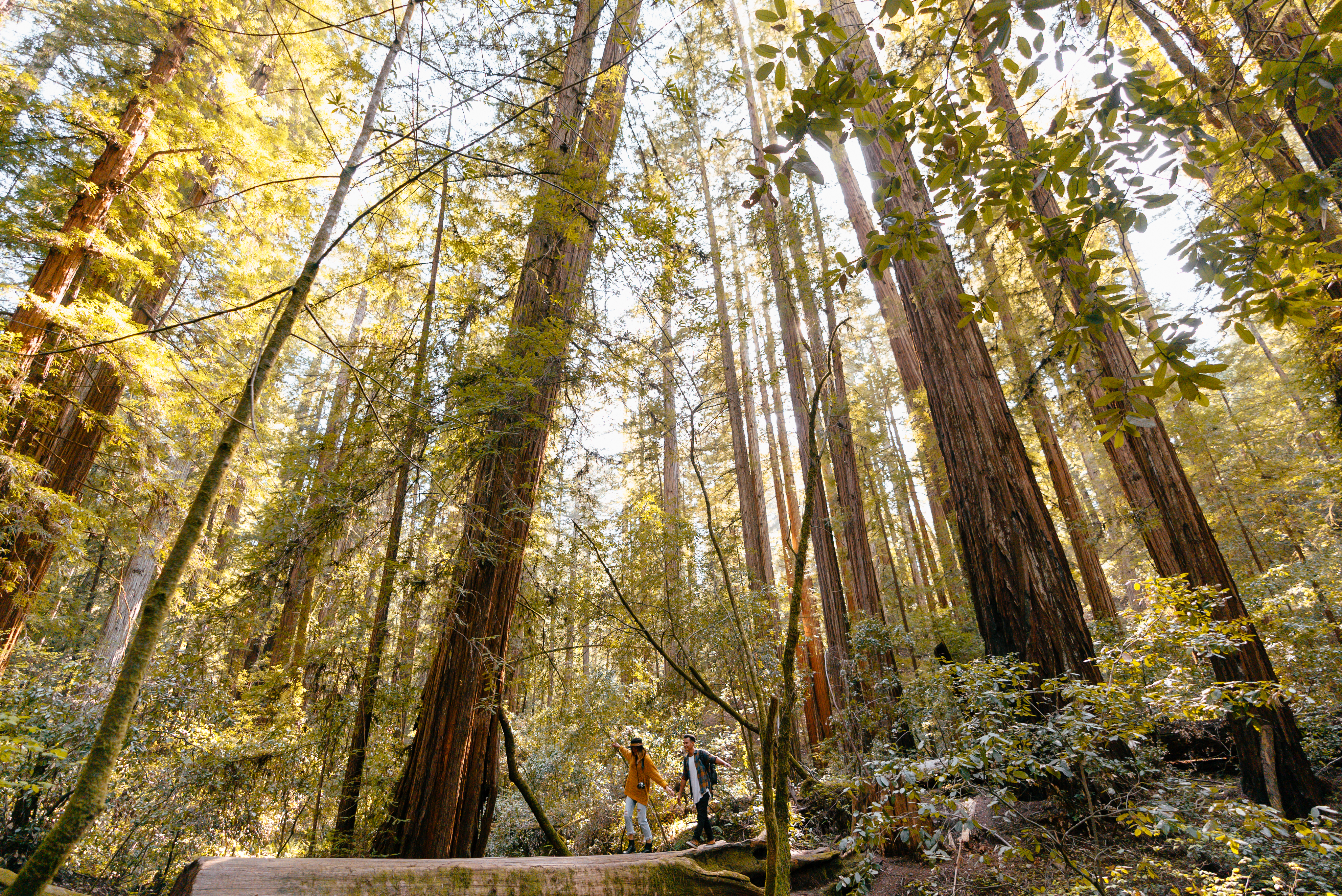 Forest Bathing in Armstrong Redwoods State Natural Reserve, Sonoma County, California