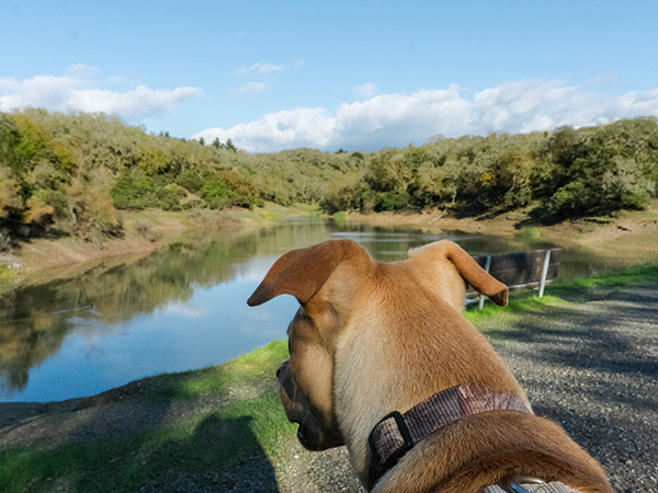 pet friendly regional and state parks sonoma county