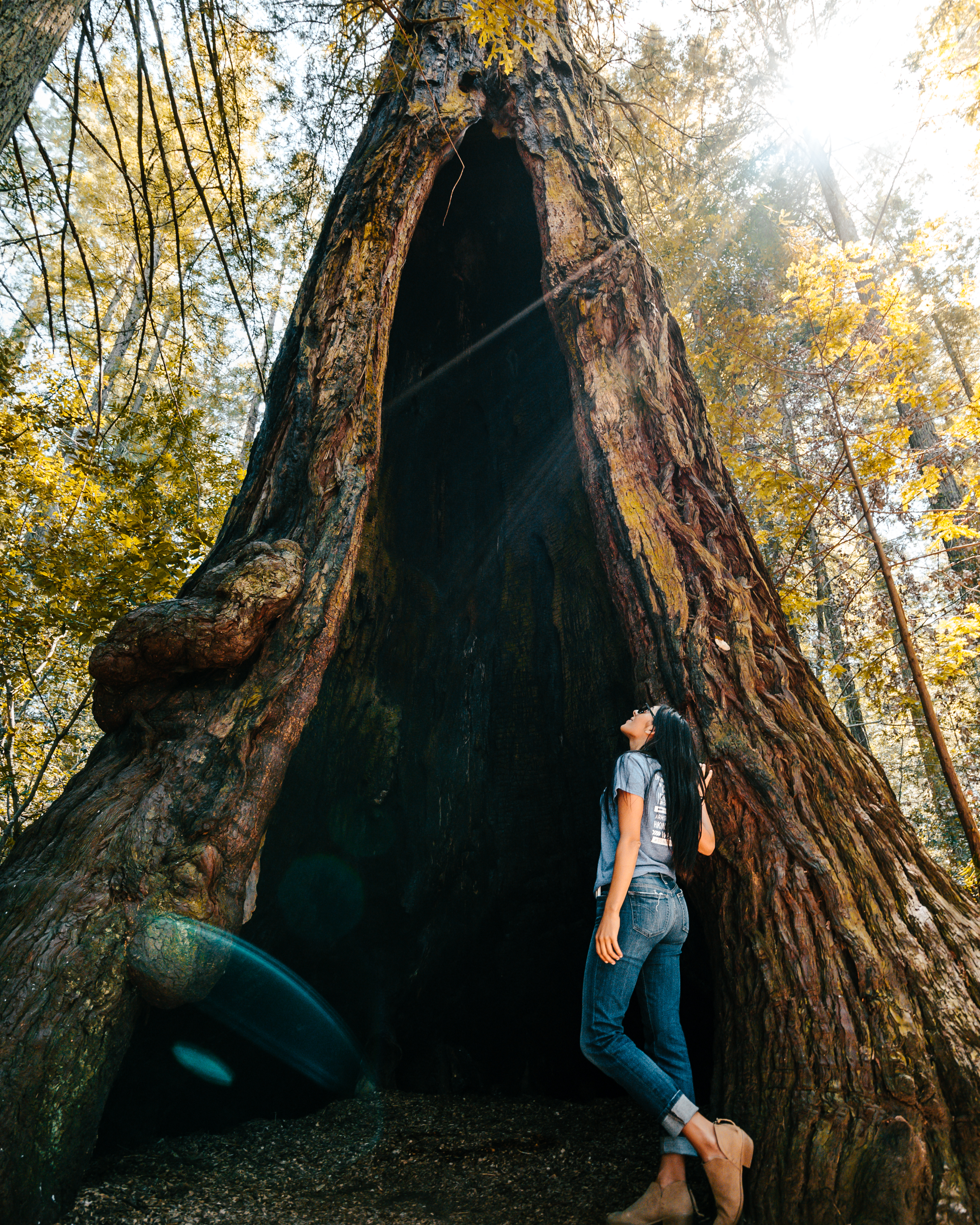 Forest Bathing in the redwoods of Grove of the Old Trees in Sonoma County, California