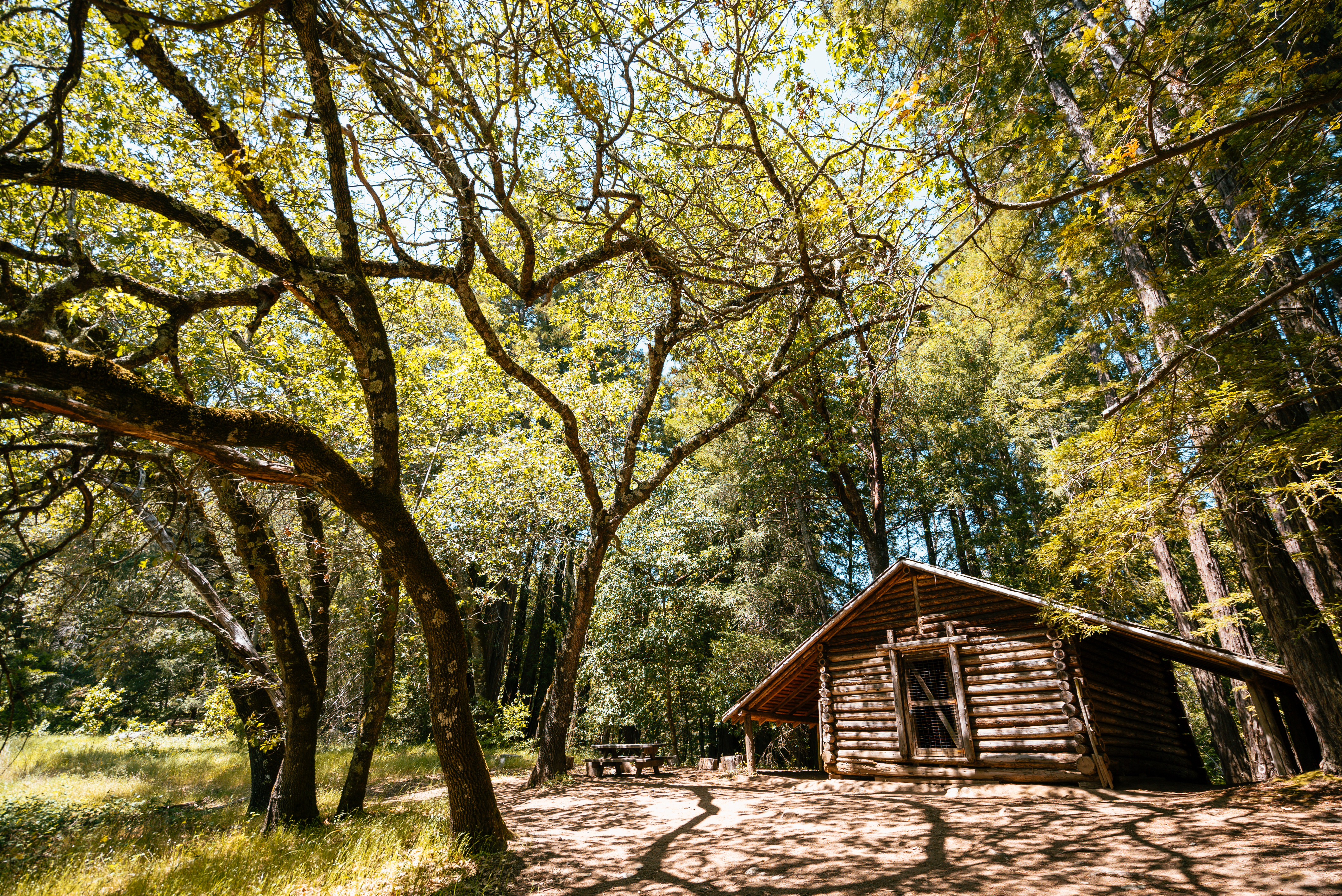 Forest Bathing at Jack London State Historic Park, Glen Ellen, Sonoma County, California