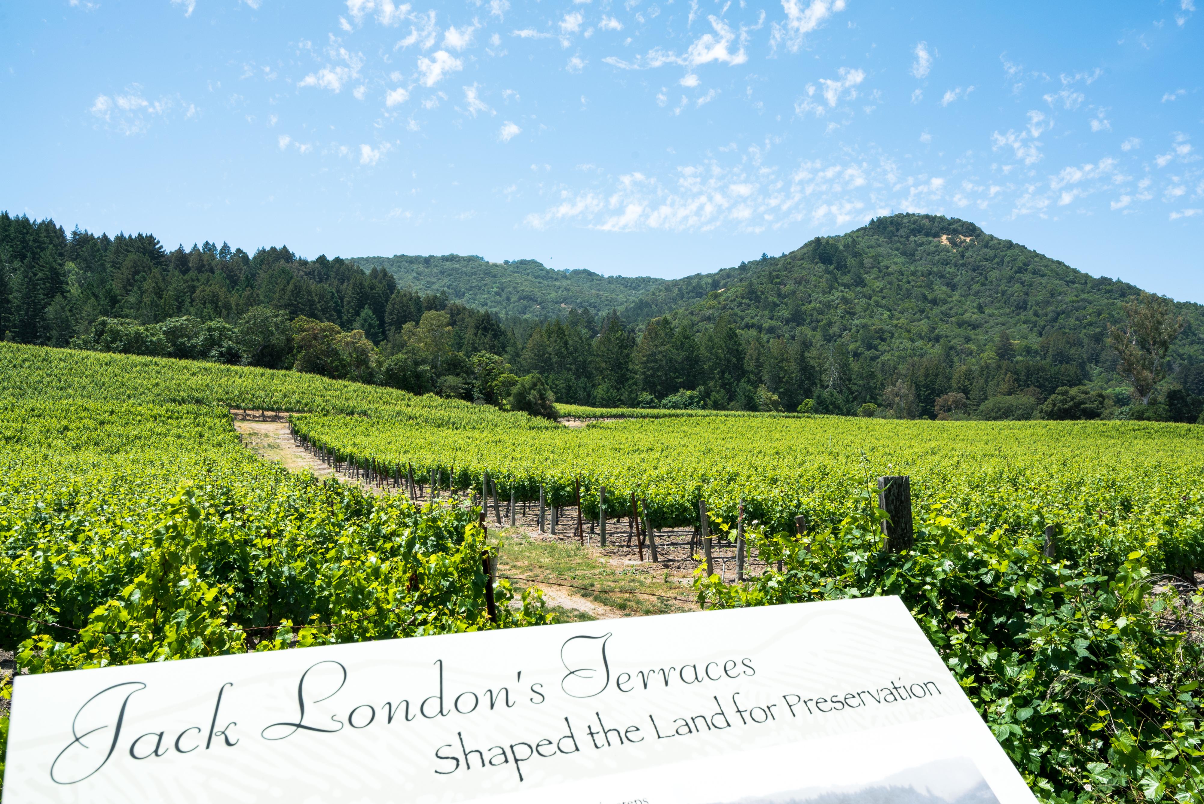 Go hiking amongst vineyards and redwoods at Jack London State Historic Park in Glen Ellen, Sonoma County, California