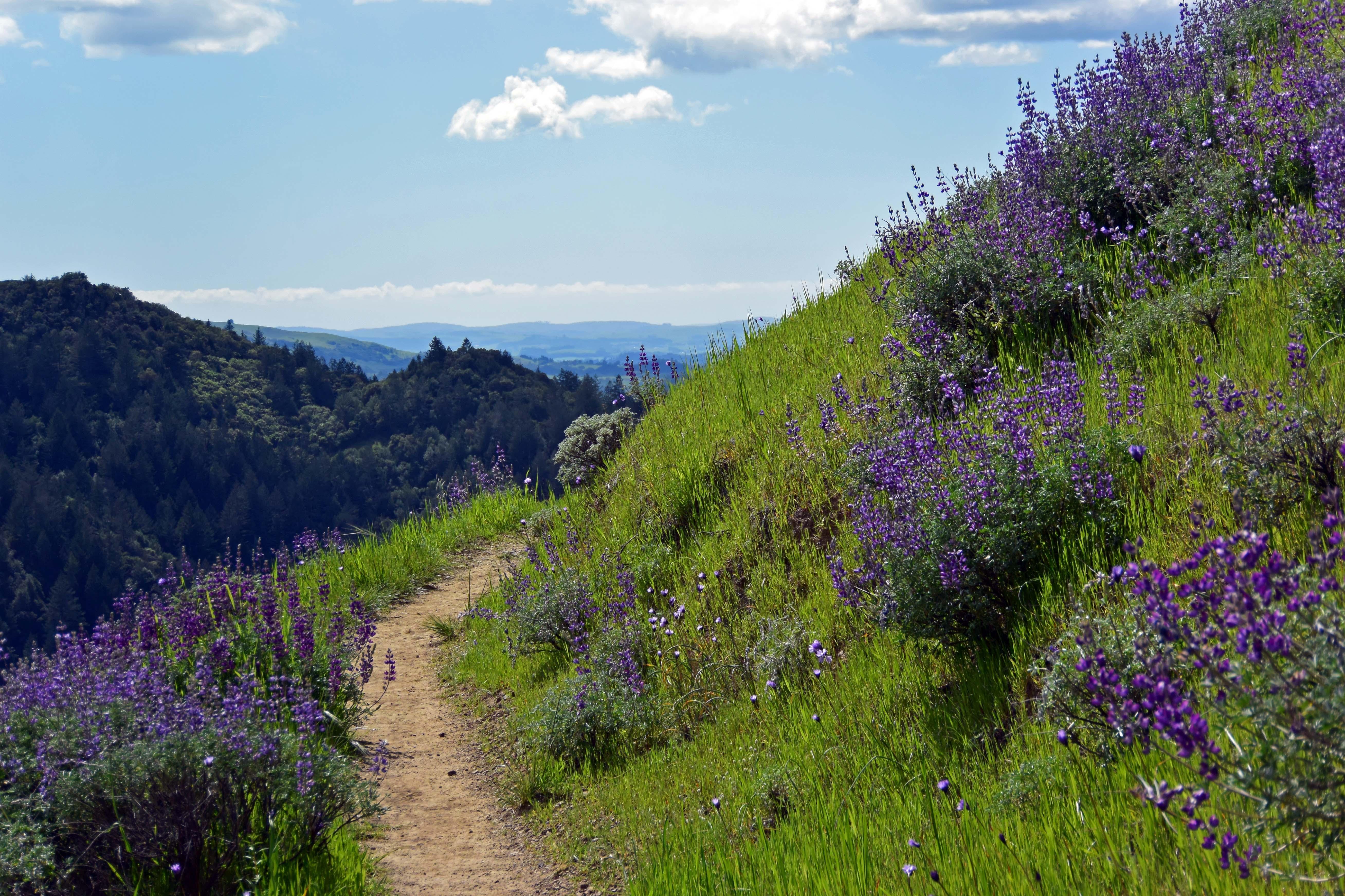 Sugarloaf Ridge State Park, Kenwood, Sonoma County, California