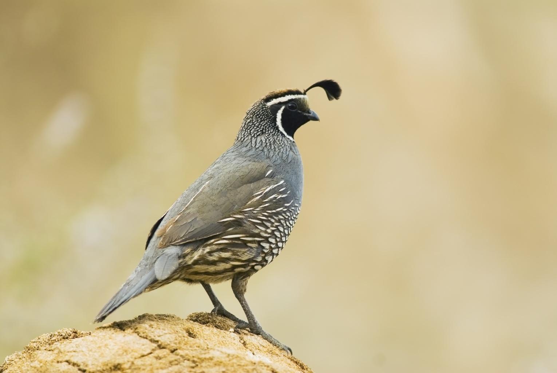 Bird Watching in Helen Putnam Regional Park, Sonoma County, California