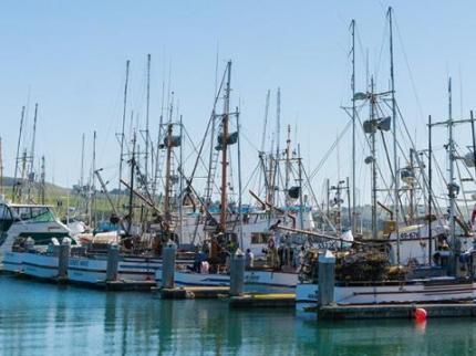 Bodega Bay Marina of docked boats in Sonoma County