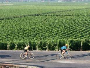 biking through sonoma county