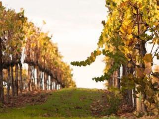 seghesio vineyards and winery hike