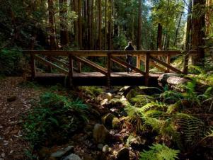 Kruse Rhododendron Reserve, Sonoma County, California
