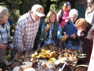 mushrooms bohemia ecological preserve