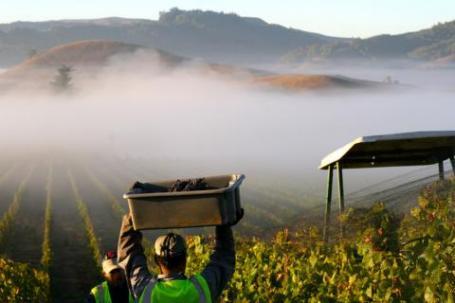 petaluma gap wine region and appellation