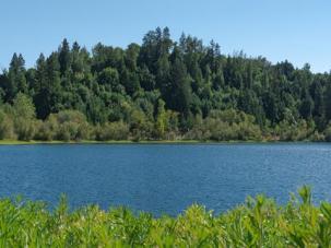 Riverfront Regional Park redwoods