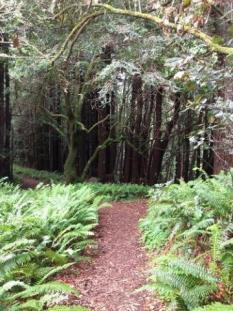 Pomo Canyon Trail, Jenner, Sonoma County, California