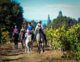 Rollini F Ranch horseback riding in sonoma county