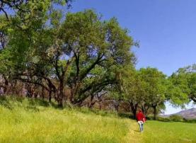 Sonoma Valley Regional Park, Sonoma County, California
