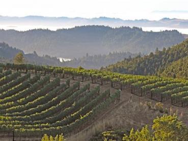 fort ross vineyard sonoma county