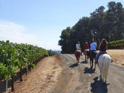 chalk hill wine country trail rides
