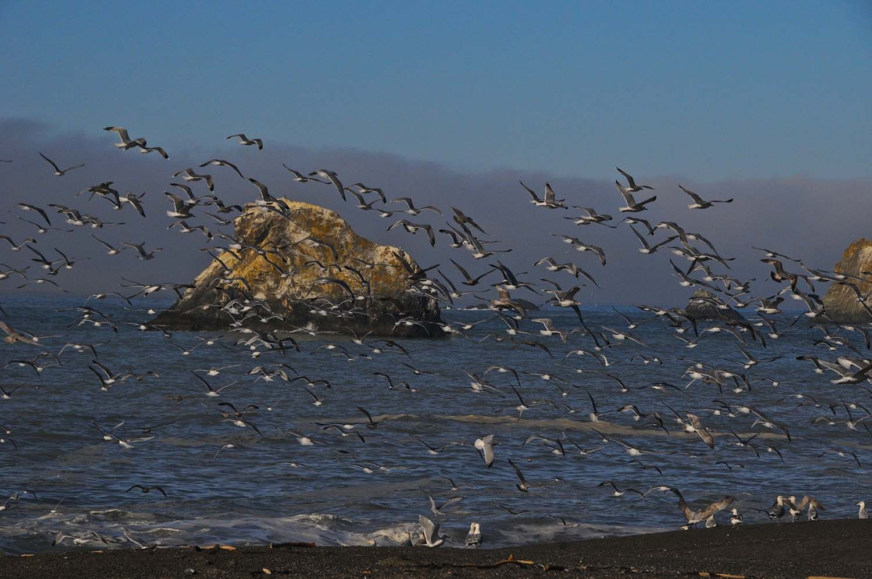 Bird Walk Coastal Access Trail, Bodega Bay, California