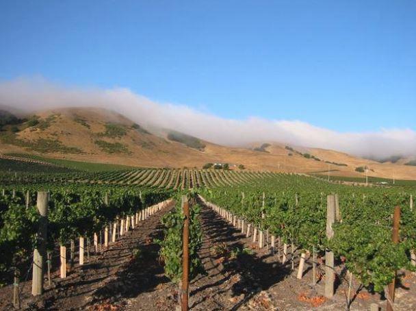 schug carneros sonoma county wine tasting winery vineyard