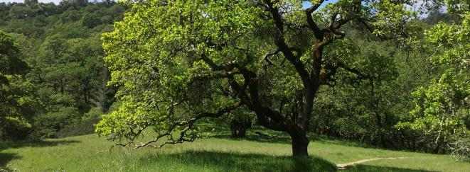 Shiloh Ranch Regional Park, Windsor, California