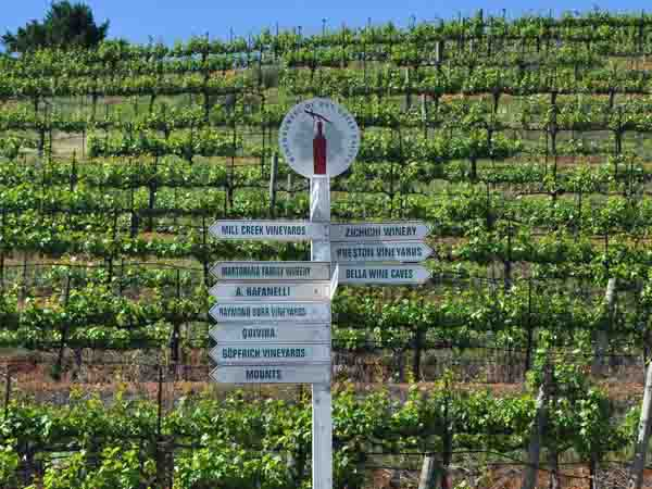 sonoma county vineyards wine tasting tours