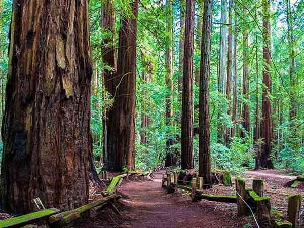 Sonoma county redwood wedding