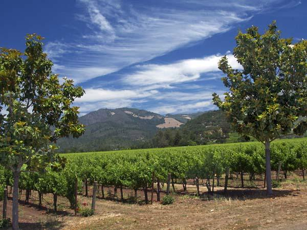 Guide to sonoma wine country for your first time visit for Best time to visit wine country