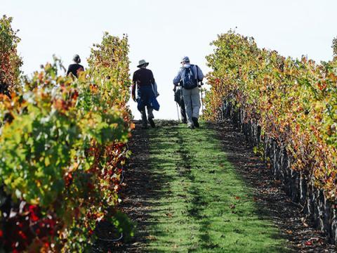 beautiful castle winery sonoma county jordan vineyard winery healdsburg