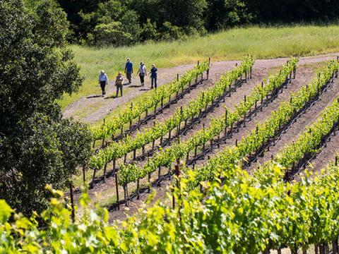 jordan vineyard and winery sonoma county spring hike