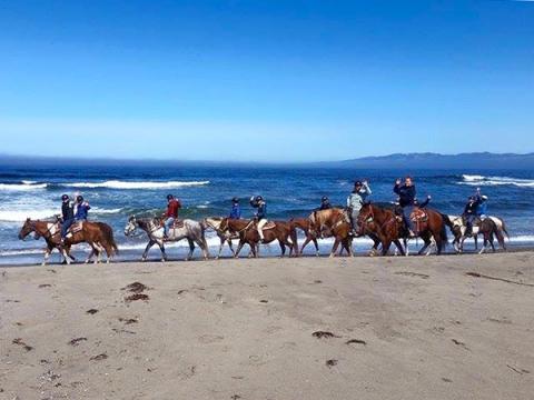 Horseback riding in Healdsburg, California