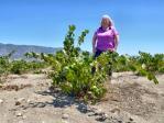 Carol Shelton Wines