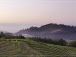 Kamen Estate Wines
