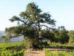 Notre Vue Estate Winery & Vineyards