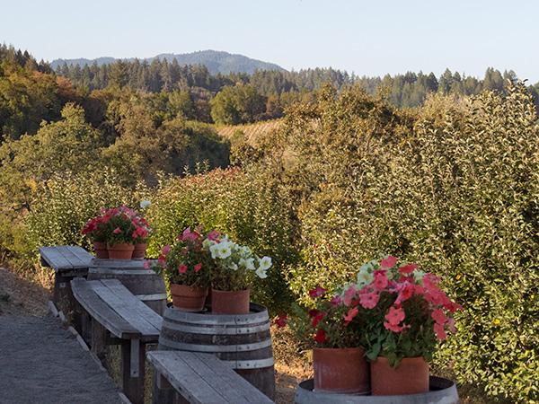 iron horse vineyards sebastopol sonoma county